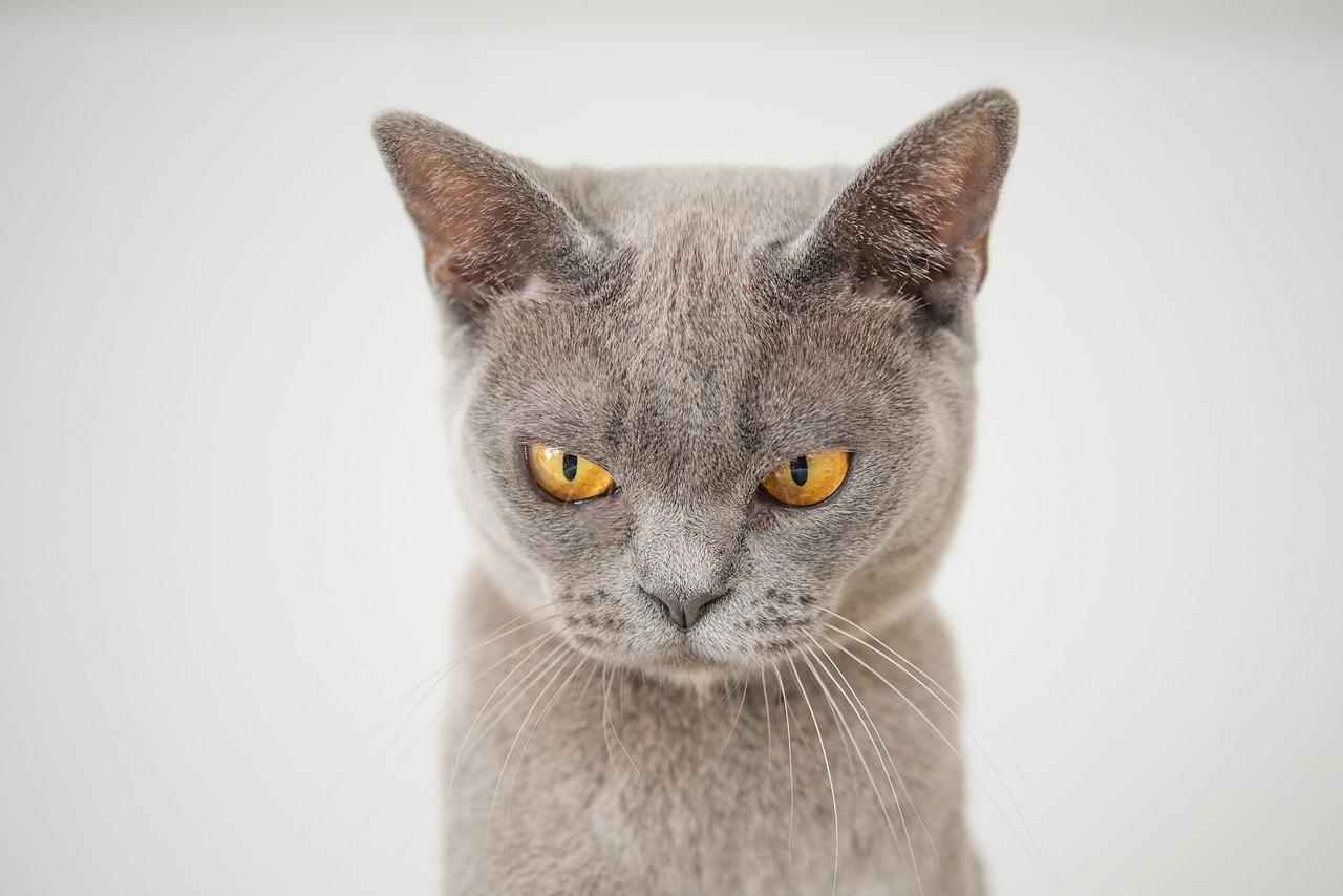 cat-3635300_1280